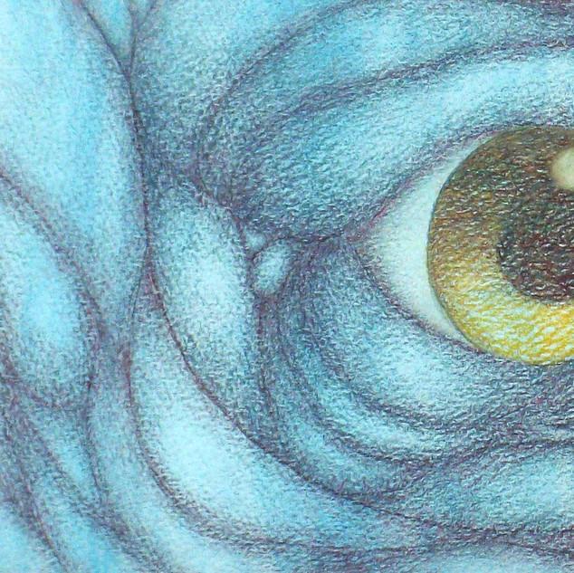 """Eye of the Gaint"""