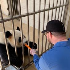 Feeding Pandas in Chengdu China