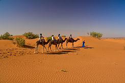 Group riding camels.jpg