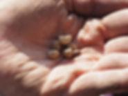 Seed Swap Man Holding Seeds.jpg