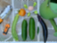 Gardening 101 Stephanie Roach.jpeg