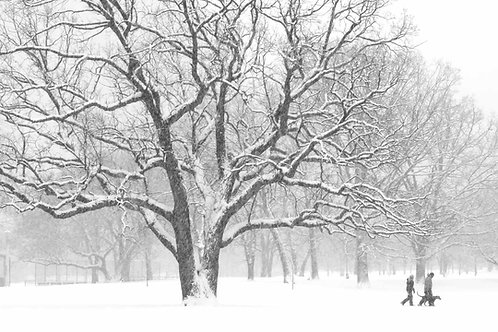 Chicago Park walking dog
