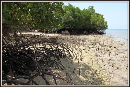 West Bali National Park Mangroves