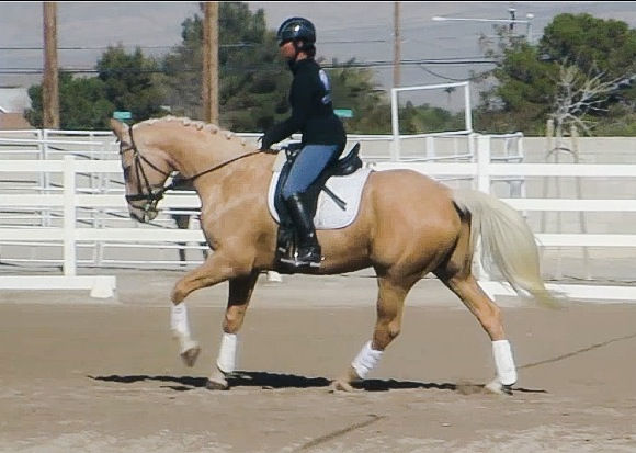 Private Lesson 45 min Own/Leased Horse