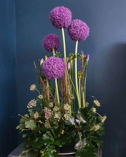 Allium arrangement