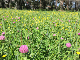 Even the weeds are beautiful at Lytle Farms