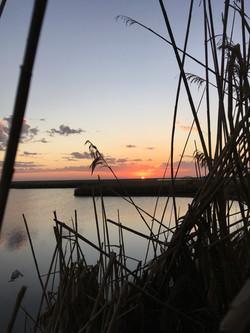Lytle Farms Marsh at Sunrise