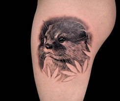 otter black Coen Mitchell Tattoo Gold Takapuna Tattoo Studio Auckland New Zealand