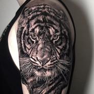 Tattoo Gold Best tattoo studio Auckland New Zealand Takapuna