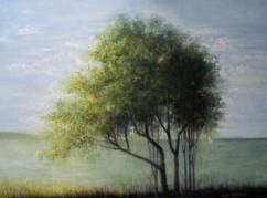 Trees, Water, Sky