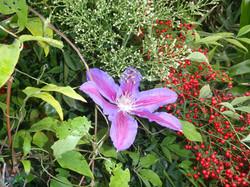 Garden - flower
