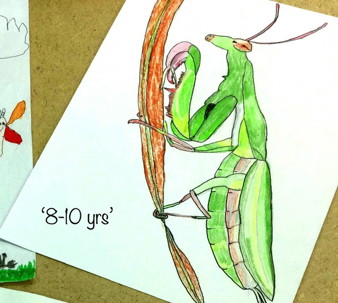 Insects and Flowers Competition Winner 8-10