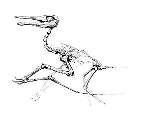 pterodactylus.jpg