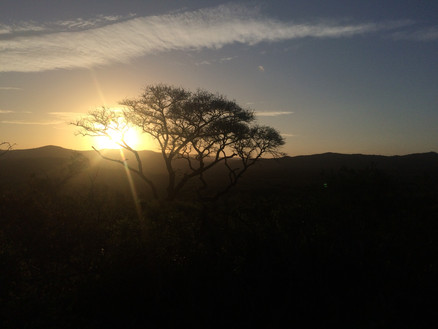 South African Sunset in the bush.JPG