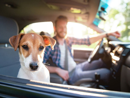 Safely Transporting Your Pets