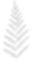 Dalai Mala, fern, sacred nature, plant, connect