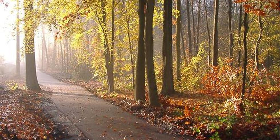 [Entraînement] Forêt à St Amand