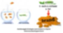 Eco Cleaning Service ti aiuta a costruire il uo brand