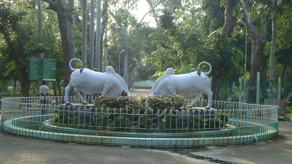Statue of two white bulls in the middle of a park