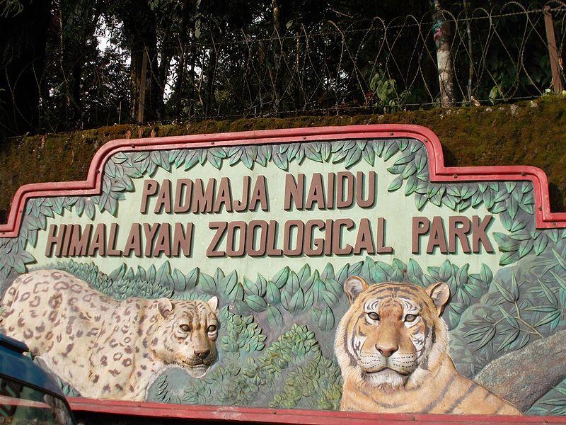 Display on entryway of padmaja naidu zoo of a tiger and cheetah