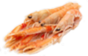 scampi-removebg-preview (1).png