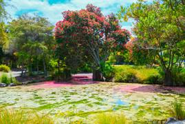 Rachel Spring, Rotorua
