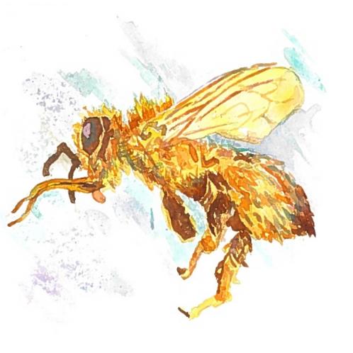 #123 - Too Much Honey