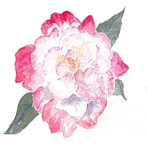 #118 - Double Delight Rose