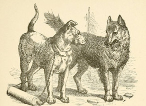 """""""The truth about dogs and wolves"""""""