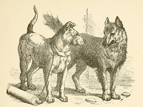 """The truth about dogs and wolves"""