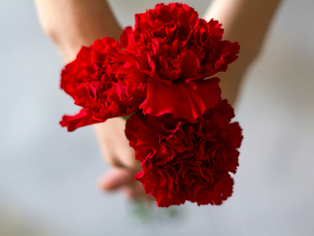 Red Carnations by Peter Philipps