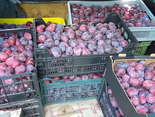 Zbieramy wiśnie i śliwki