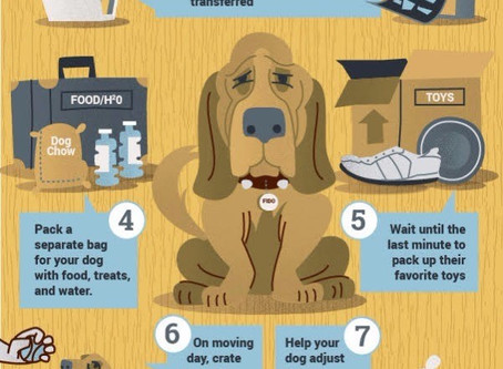 When Fido Tags Along: Moving Tips You Need to Know