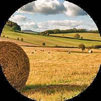 circle-cropped (4).png