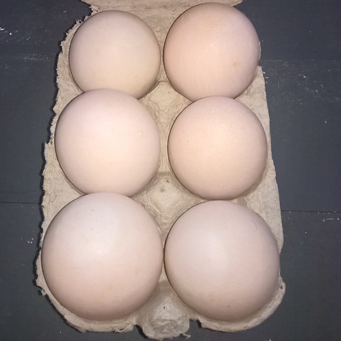 Large Free range Duck eggs 1/2 dozen