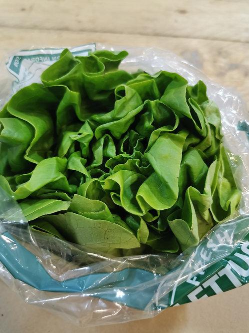 Flat leaf lettuce
