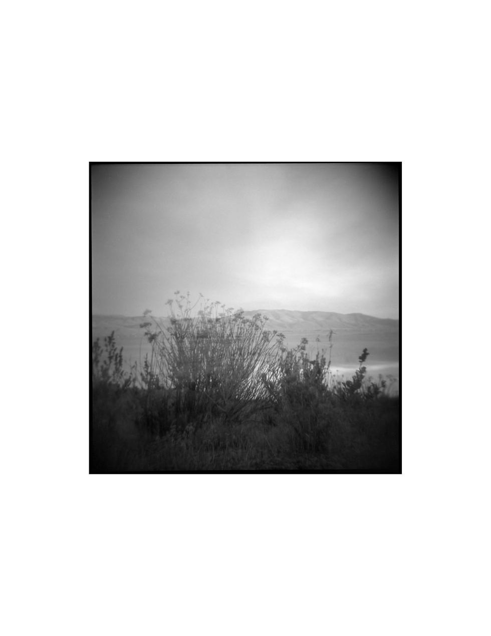 13brushlandscapefinal.jpg