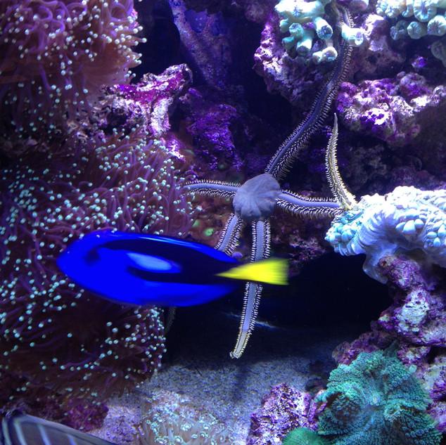 Spectacular_Aquarium.jpg