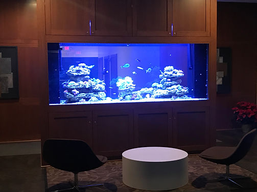 900 gallon tank at 4 weeks.jpg
