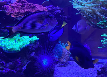 900 gallon Lobby Aquarium.jpg