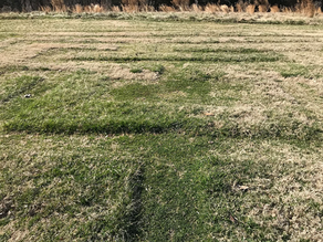 Agecroft's Turf Maze