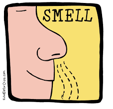 Activity #1: Smell-and-Seek