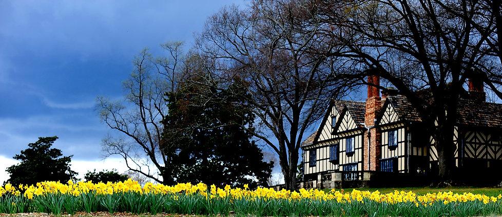 Agecroft daffodils.jpg