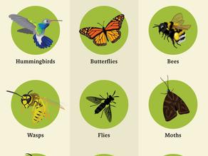 Activity #1: Pollinator Seek and Find
