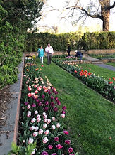 Guests with Tulips.jpg