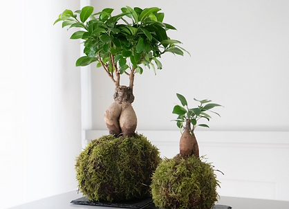 omotesando plants.PNG