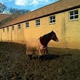 Mud Horse