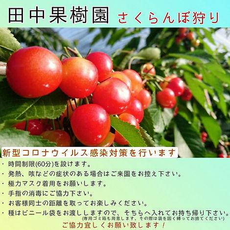 田中果樹園.jpg