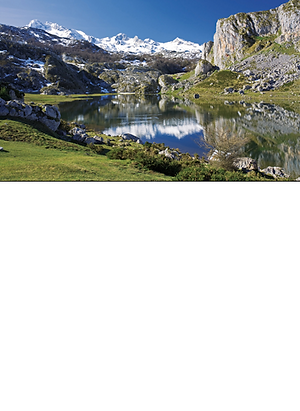 picos homepage.png