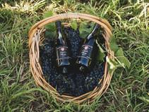 Mistletoe Winery - Where Wine is a Way of Life